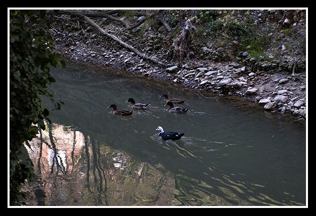 19-03-2009-paseando-por-zaragoza_10