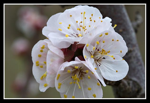 primavera_19-1