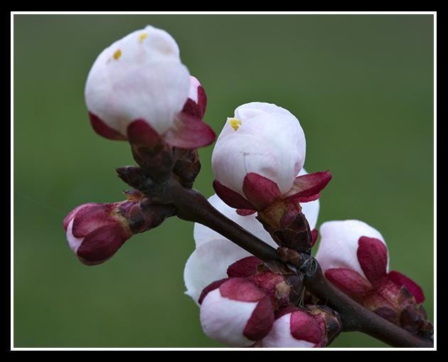 primavera_19-3