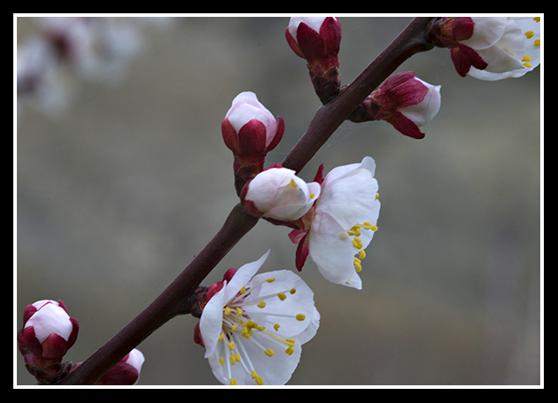 primavera_19-4