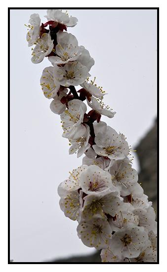 primavera_19-5