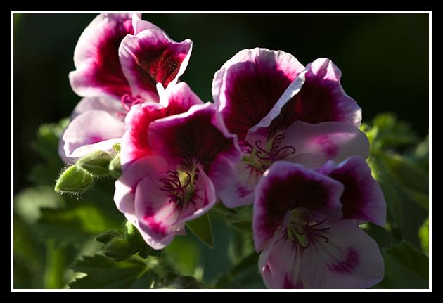 04-04-2009-flores-de-la-terraza_9
