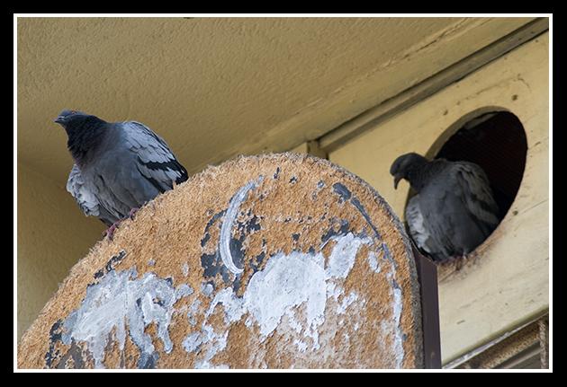14-05-2009-calle-boggiero-10