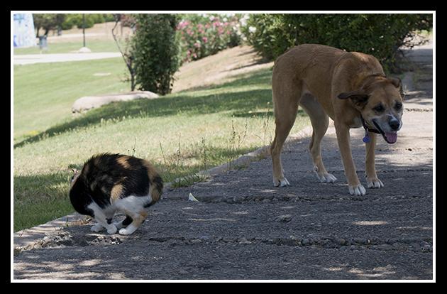 18-06-2009-gato-en-defensa_10