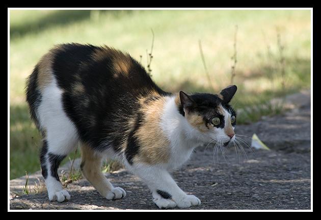 18-06-2009-gato-en-defensa_241