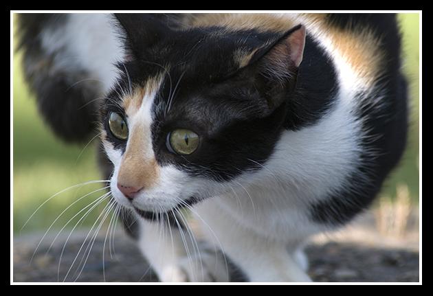 18-06-2009-gato-en-defensa_43