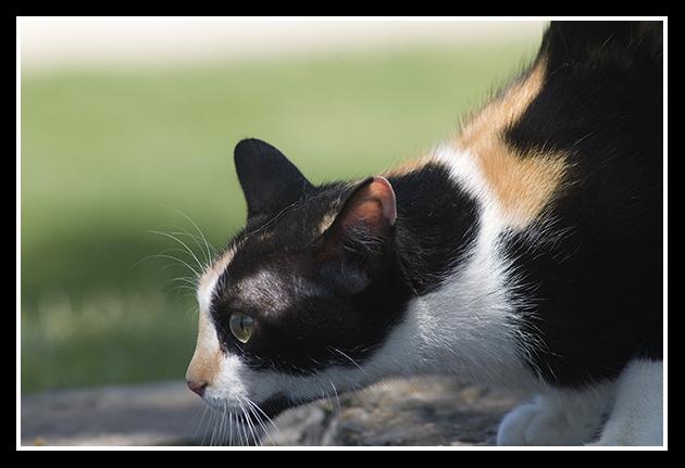 18-06-2009-gato-en-defensa_45