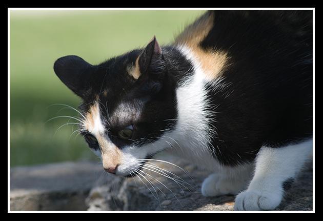 18-06-2009-gato-en-defensa_48