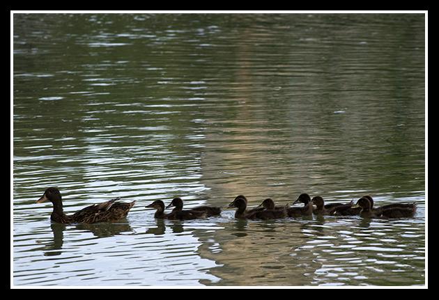 23-06-2009-rio-ebro_29