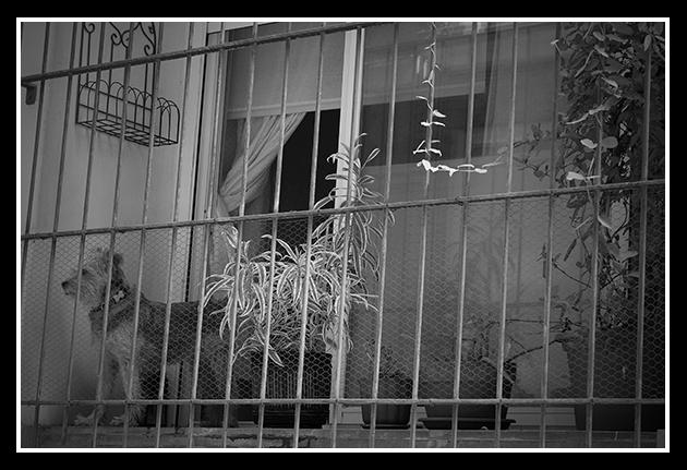 07-07-2009-calles-de-zaragoza-i_106