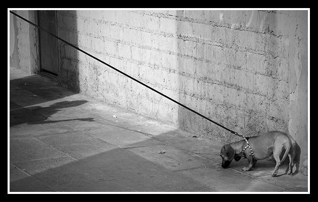 07-07-2009-calles-de-zaragoza-i_2