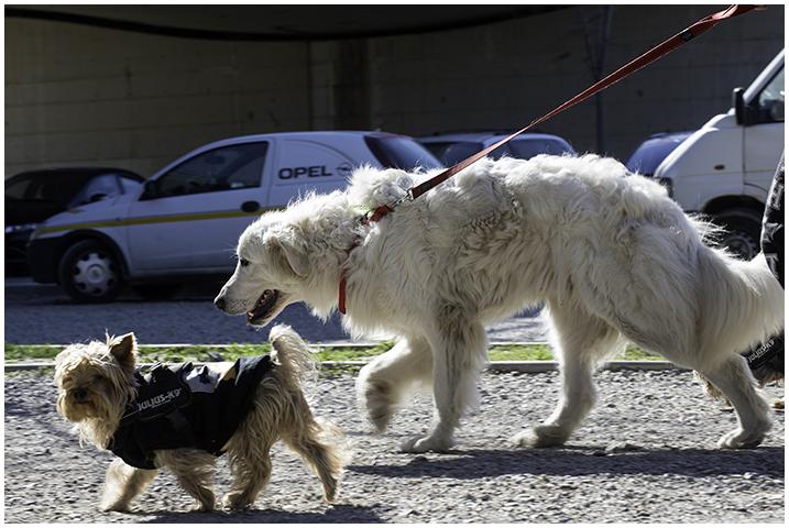 2015-03-05 perros_7