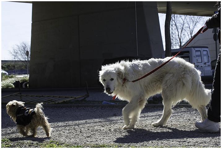 2015-03-05 perros_9